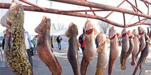 Source: International Eelpout Festival